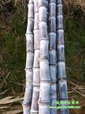 甘蔗批发价格低-产地直销